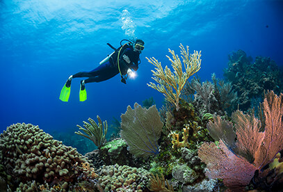 Diving Packages Image