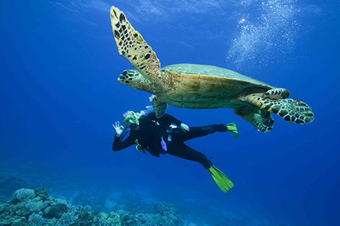 Diving excursions in the Turks and Caicos