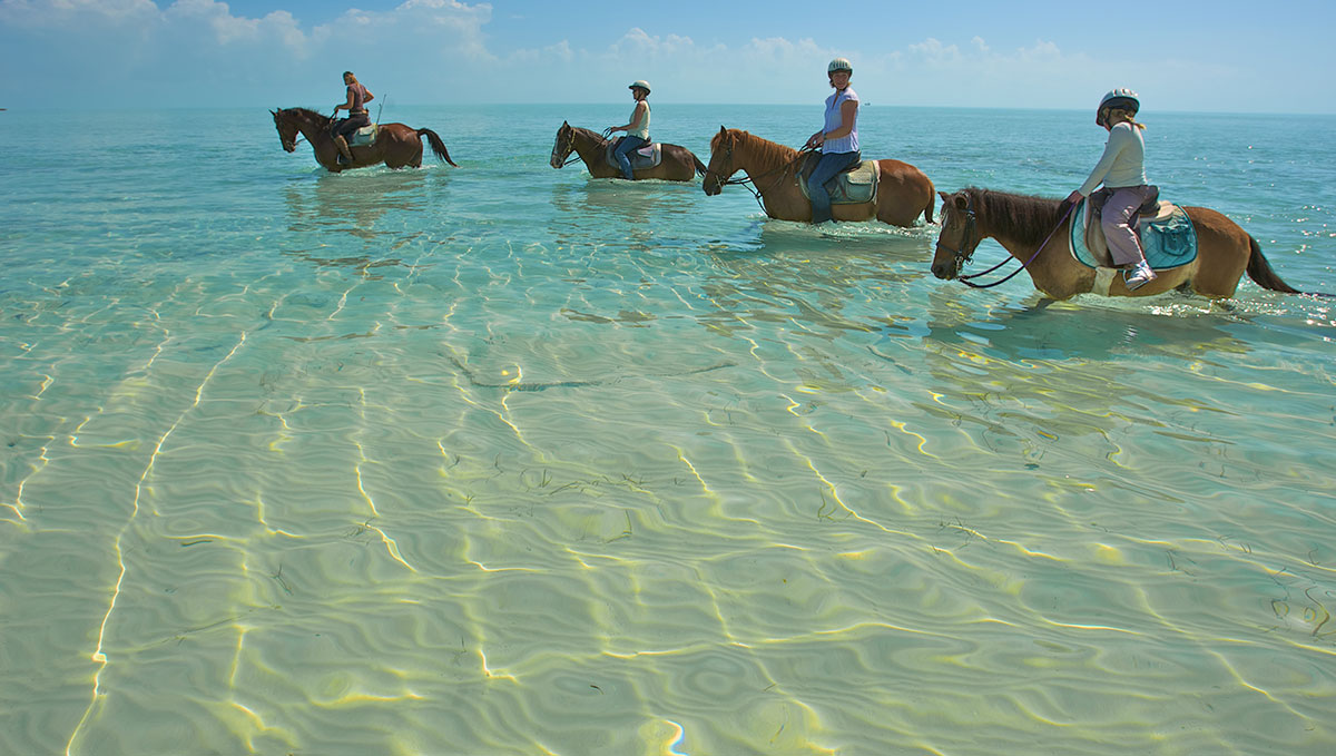 turks & caicos tours and excursions | the sands at grace bay